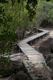 Wooden footbridge in the mangrove forest, Seychelles