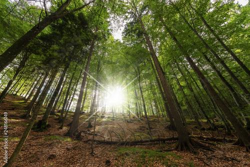 Leinwandbild Motiv Pine and beech forest with sun rays - Italian Alps