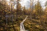 Weg im Wald - 248174707