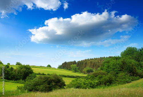 Foto Murales Summer field and blue sky . Summer background.