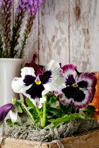 Pansy flowers in wooden pot.