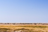 Group of animals at a water hole / Group of zebras, wildebeest and springboks at a waterhole in Etosha National Park.