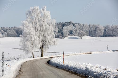Birke mit Raureif an einer Landstraße in Oberbayern - 248212973