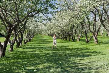 A lonely girl in a flowering old apple orchard. © Sergey Rybin