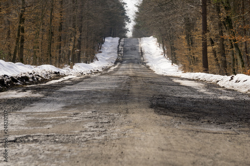 Road traversing a seasonal forest - 248232137
