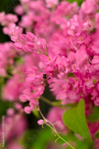 bee on flower - 248257103