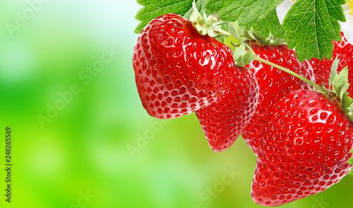 garden healthy ripe strawberries