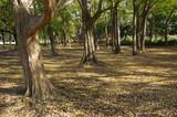 秋の林 - 248268313