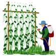 agriculturist sprays lentils plant vector design