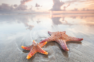 Two starfish on a summer beach