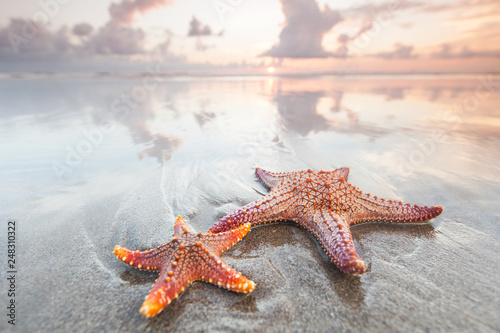 Two starfish on a summer beach © yellowj