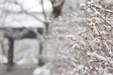 日本のお寺の境内の雪景色