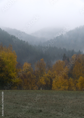 Vertical shot of foggy forest with yellow birch trees in the foreground - 248365188