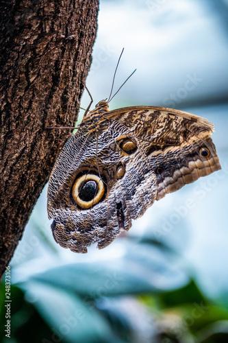 Nahaufnahme eines Schmetterlings - 248373106