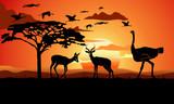 Antelope Gazzelle Ostrich