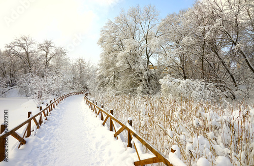 Path in the winter park, reeds and branches in the snow, blue sky.