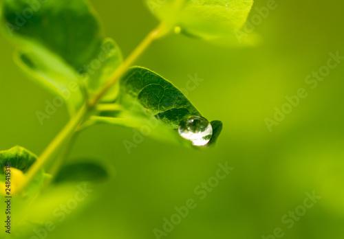Leinwandbild Motiv Water drops on a green leaf of a plant