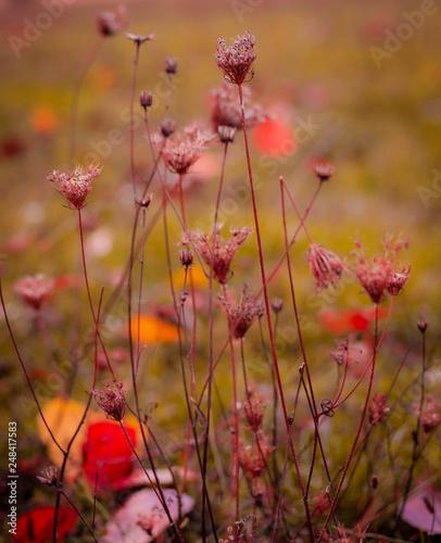 Wiesenblumen - 248417583