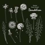 Set of white sketches of dandelions.