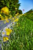 Blume Sommer gelb