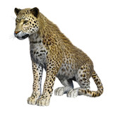 3D Rendering Big Cat Leopard on White - 248457748