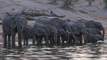 African Elefant © Optikus