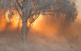 Beautiful morning dawn in winter forest with amazing sun beams in fog - 248494754