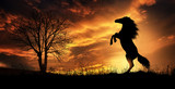 rearing horse at sunset - 248494966