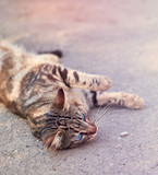 gray striped street cat with blue eyes lies on the asphalt - 248534390