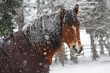 Pferd mit Schneeflocken