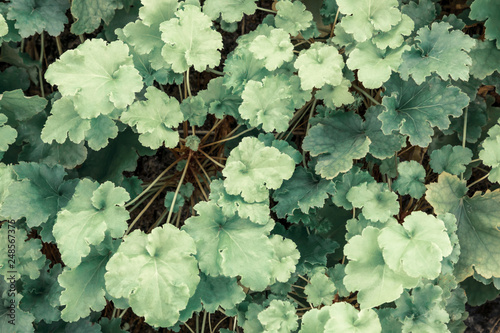 (自然)かわいた緑の葉 © Moarave