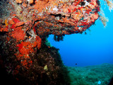 Scuba Diving Malta - Wied iz-Zurrieq Reef - 248571109