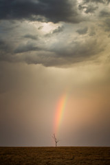 Rainbow ends at a small tree, Queensland