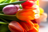 Colorful tulips in the spring