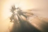 Sunrise in the jungle. Chitwan National Park, Nepal - 248611712