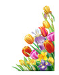 Arrangement with multicolor spring flowers over white background - 248614959