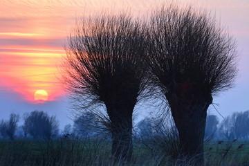 piękny zachód słońca, drzewa © FredanFoto