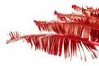 Feuilles rouges de ravenale