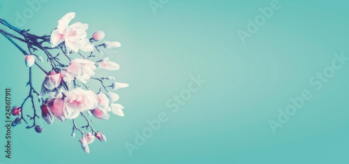 Foto Murales Beautiful magnolia spring blossom. Flowering branch of magnolia at turquoise background. Springtime concept. Floral border. Banner or template with copy space