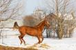 Horses walking in winter field in the village - 248621966