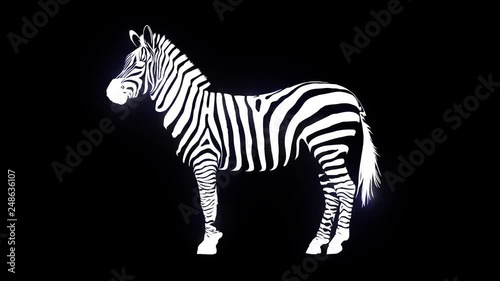 zebra that is created in the black background with lasers