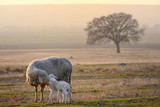 Sheep and two lambs - 248639923