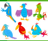 colorful birds cartoon characters set