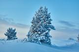 Beautiful Christmas landscape - 248648943