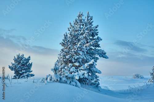 Beautiful Christmas landscape - 248648943