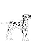 cute dalmatian dog characters  illustration drawing watercolors