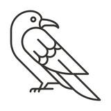 raven  bird  animas