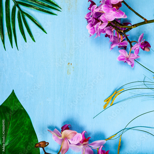 Orchids (Phalaenopsis) and leaves - 248684195