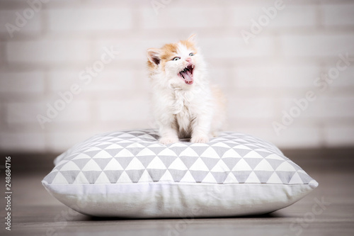 Cute kitten with pillow on the floor