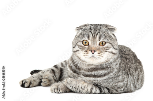 Cute cat lying on white background - 248685540